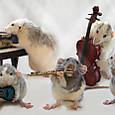 Rats_band