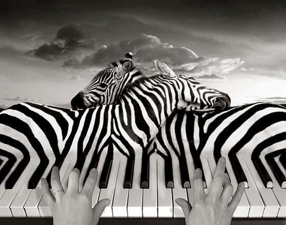 Zebra_piano